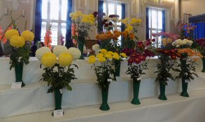 Show flowers